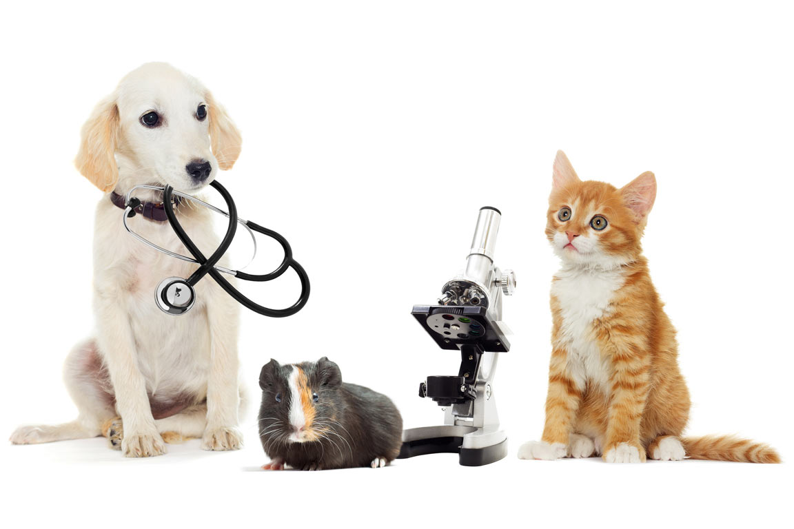 Pet Healthcare - the cat and the dog